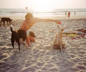 animal, ocean, and beach image