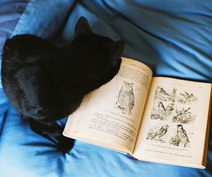 cat, book, and black cat image