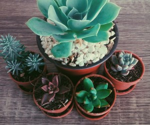 cactus, mini, and suculentas image