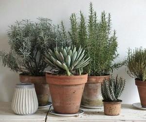 cactus, plants, and feelings image