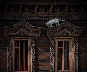 cat, house, and russia image