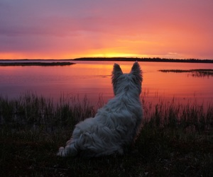 colors, sunset, and animals image