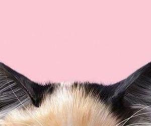bichinhos, dog, and pet image
