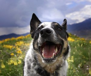 dogs, nature, and smile image