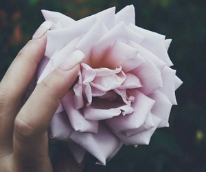 always, flower, and love it image