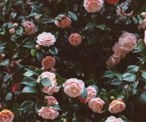 flowers, wallpaper, and rose image