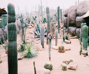 cactus, indie, and pink image