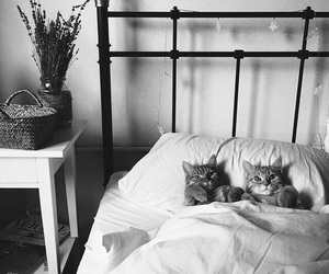bed and cats image