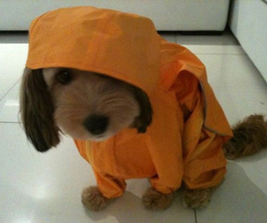 adorable, cloths, and puppy image