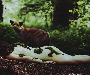 animals, forest, and fox image