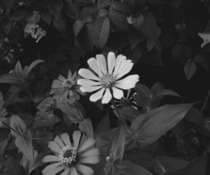 black, bloom, and bnw image