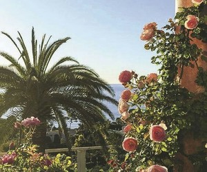 palms, roses, and summer image