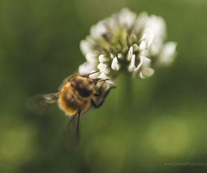 bee, fine art photography, and lensbaby image