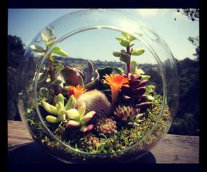 cactus, sunshine, and succulent image