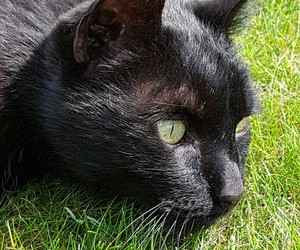 black, cats, and cat image