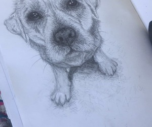 pencil, cute nose, and doggo image