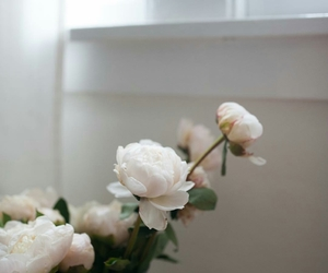 beauty, roses, and beautiful image