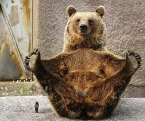 bear, brown, and funny image