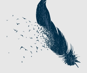 bird, feather, and free image