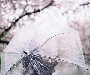 pastel, rain, and sakura image