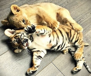 adorable, animals, and sweet image