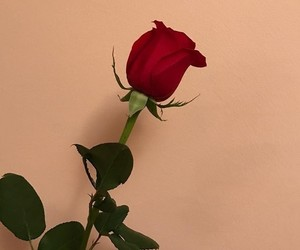 rose and theme image