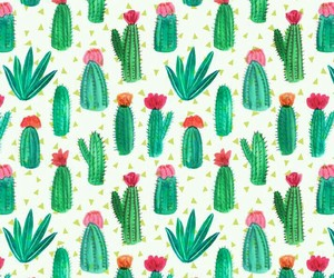 cactus and verde image