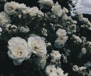 beautiful, plants, and white image