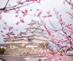 cherry blossom, traveling, and likefairytales image