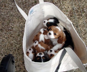 bag, puppies, and dog image
