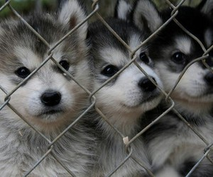 dog, puppy, and dogs image