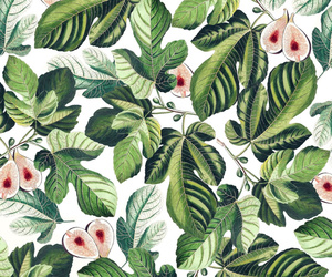background, botanical, and fig image