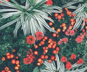 nature, plants, and Philadelphia image