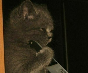cat, knife, and funny image