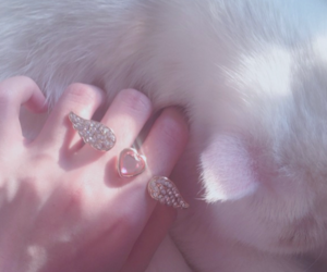 beauty, grunge, and kitty image