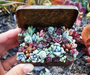 flowers, nature, and succulents image