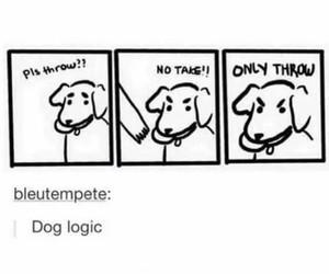 funny, dog, and tumblr image