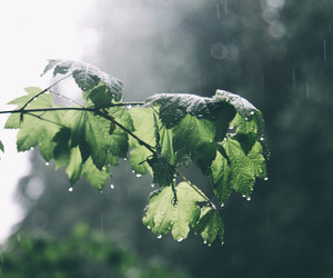 rain, leaves, and nature image