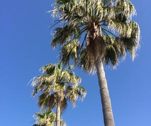 blue, Malaga, and nature image