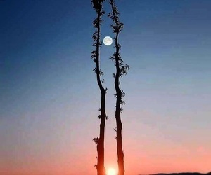 moon, sun, and tree image