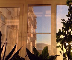 plant, window, and sun image