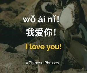 china, chinese, and language image