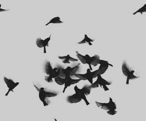 b&w and birds image