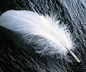 feather and white image