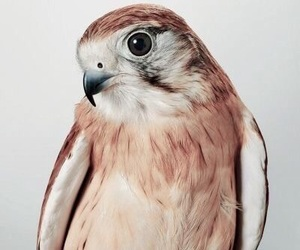aesthetic, bird, and brown image