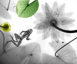 art, flowers, and frog image