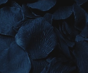 blue, flowers, and harry potter image