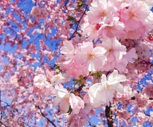 flowers, aesthetic, and bright image