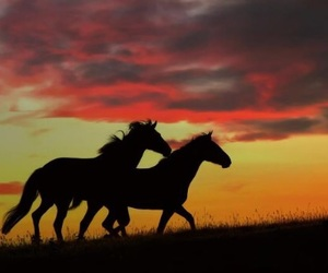 beautiful, equestrian, and dark image