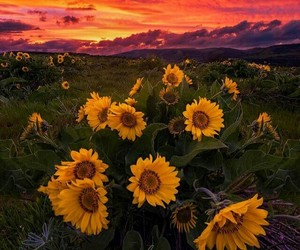 landscape and sunflowers image